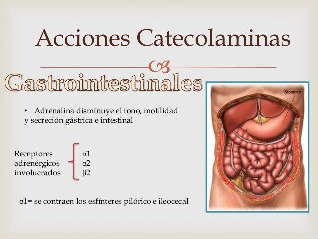 Acciones Catecolaminas                  Adrenalina relaja el músculo Detrusor Vesical y        contrae el Trígono y el es...