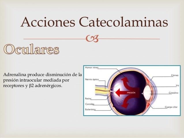Acciones Catecolaminas                    Adrenalina produce Midriasis          mediada por receptores α1 adrenérgicos.