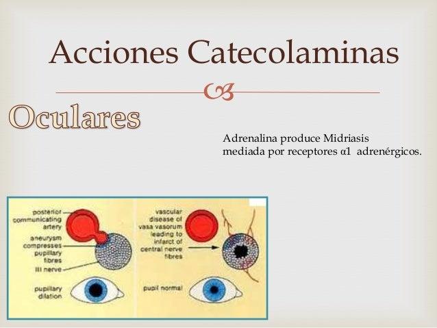 Acciones Catecolaminas                  • La Adrenalina por acción mediada por los         receptores β-adrenérgicos     ...