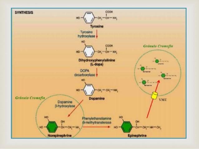 Regulación Biosíntesis                Nivel: Tirosina-Hidroxilasa: implica cambios de actividad y velocidad de síntesis.L...