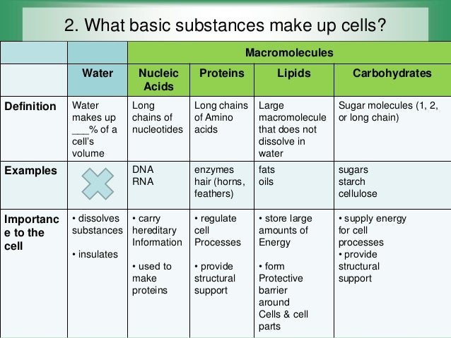 ch 21 review macromolecules amp cell theory