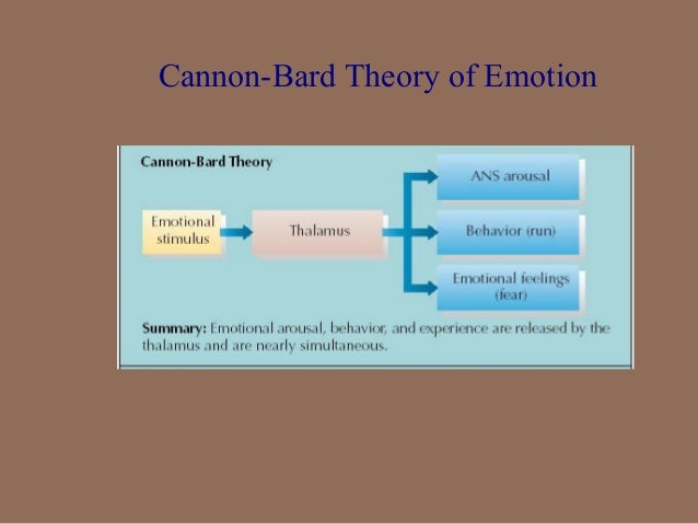 similarities in james lange and cannon bard theory of emotions Penaherreraallieappsychology uncategorized  similarities among specific emotions  explanations/theories/james_lange_emotionhtm cannon-bard theory:.