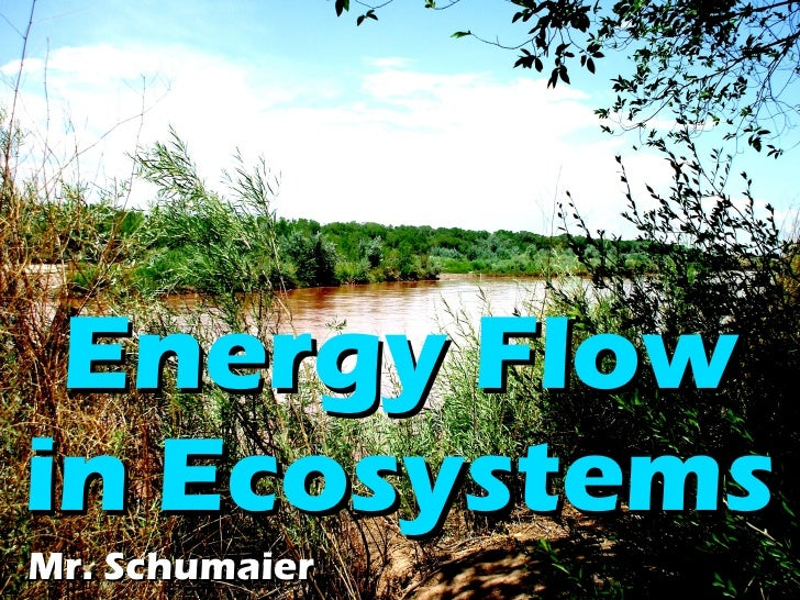 Energy   Flow   in   Ecosystems Mr. Schumaier