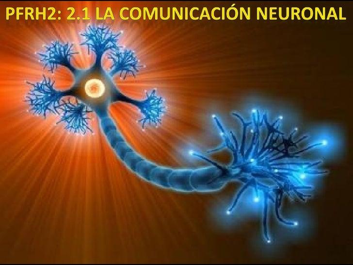 ¿Cuáles son las partes de una neurona?        ¿Cómo se comunican entre ellas?    ¿Qué problemas para la salud se presenta ...