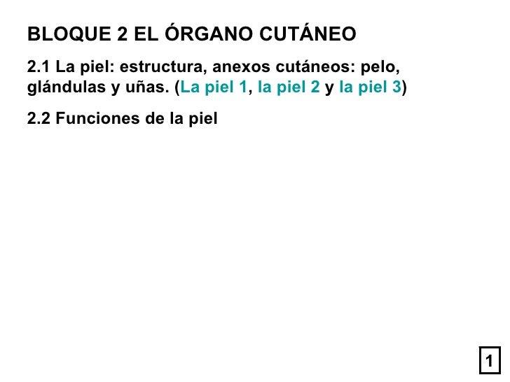 BLOQUE 2 EL ÓRGANO CUTÁNEO 2.1 La piel: estructura, anexos cutáneos: pelo, glándulas y uñas. ( La piel 1 ,  la piel 2  y  ...