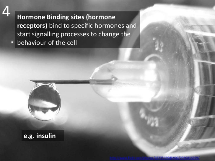 4   Hormone Binding sites (hormone    receptors) bind to specific hormones and    start signalling processes to change the...