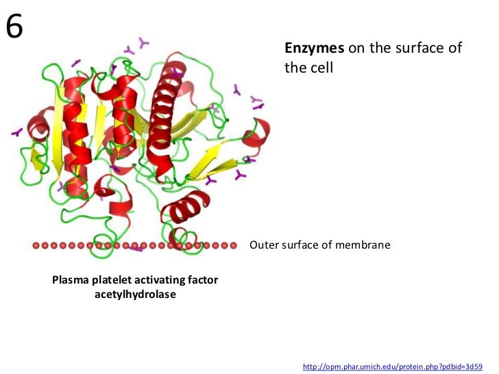 6                                             Enzymes on the surface of                                              the c...
