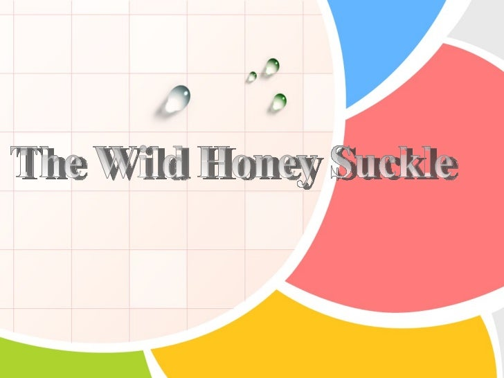 The Wild Honey Suckle          by Philip Freneau     Poet of the American Revolution     Father of American Poetry     Pio...