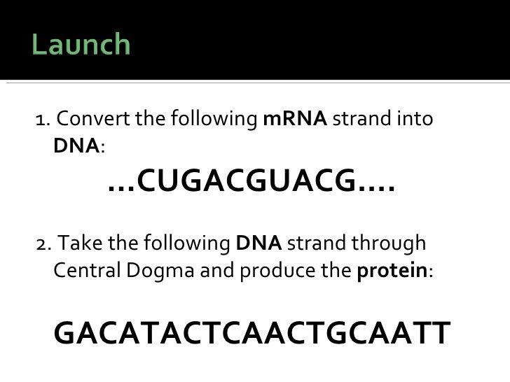 <ul><li>1. Convert the following  mRNA  strand into  DNA : </li></ul><ul><li>  … CUGACGUACG…. </li></ul><ul><li>2. Take th...
