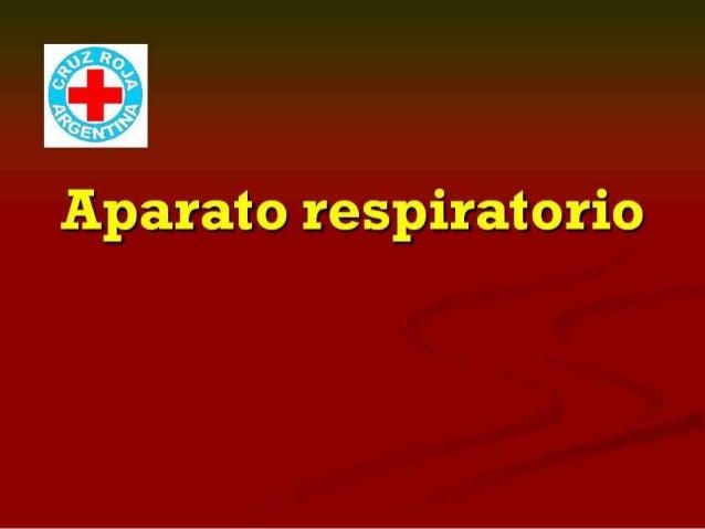 Anatomía respiratorio (x90)
