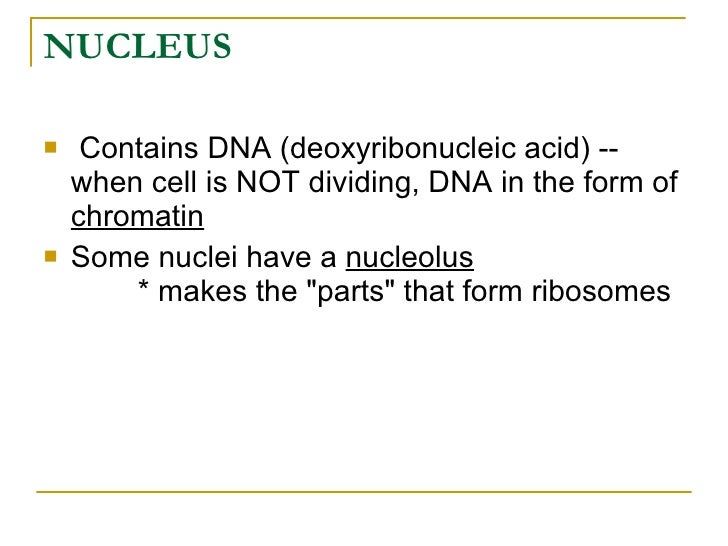 2 Anatomy Cell Biology Review