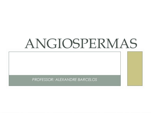 ANGIOSPERMAS  PROFESSOR: ALEXANDRE BARCELOS
