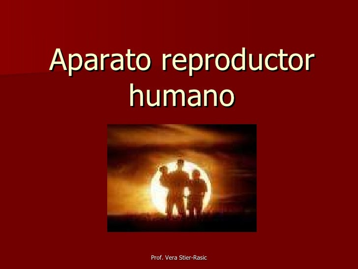 Aparato reproductor humano