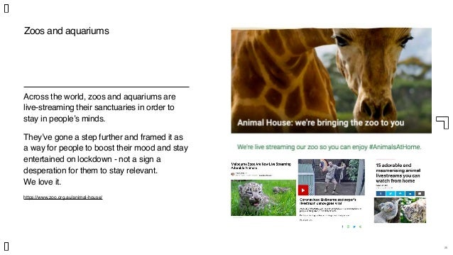 26 Zoos and aquariums Across the world, zoos and aquariums are live-streaming their sanctuaries in order to stay in people...