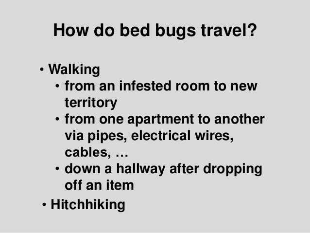 How Do Bed Bugs Travel Images