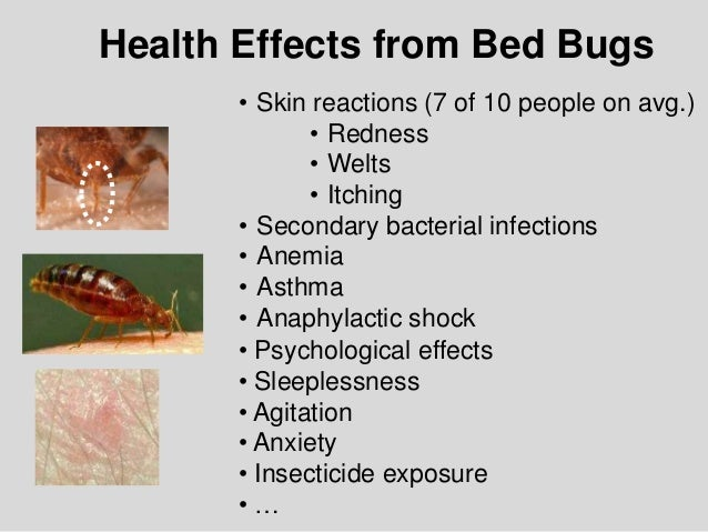 Bed Bug biology and Research by Dr Susan Jones at COBBTF
