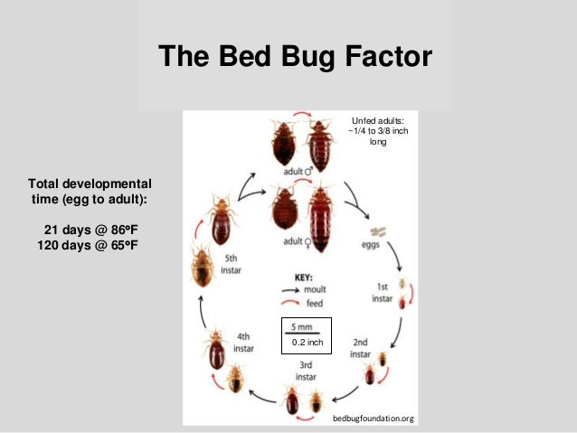 Bed Bug Biology And Research By Dr Susan Jones At Cobbtf Summit 2015