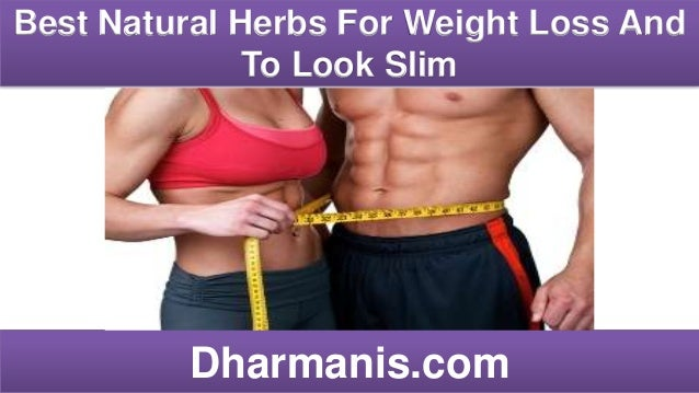Best Natural Herbs For Weight Loss And To Look Slim Dharmanis.com