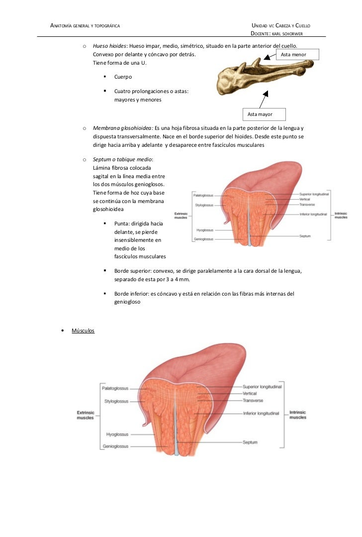 Cavidad Bucal anatomía