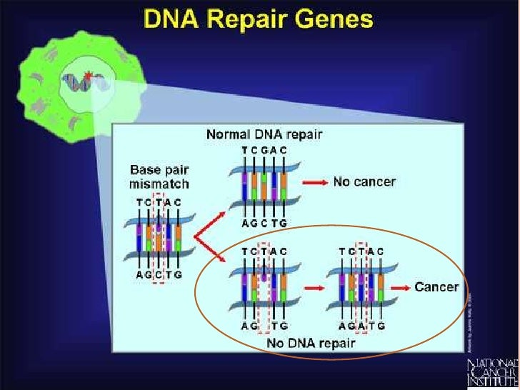 signs and symptoms of lung cancer biology essay Genetics and cancer  advances in genetics and molecular biology have improved our knowledge of the inner workings of cells,  signs & symptoms of cancer.