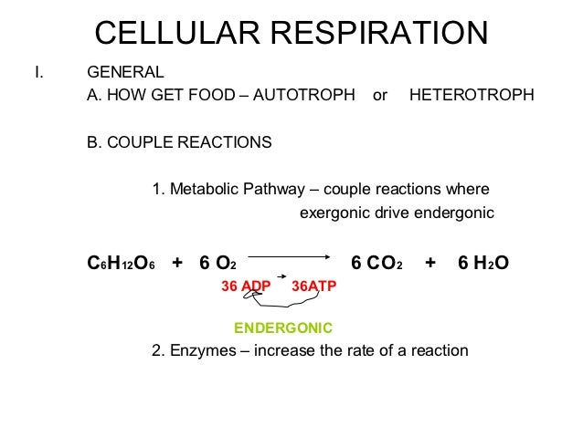 CELLULAR RESPIRATIONI.   GENERAL     A. HOW GET FOOD – AUTOTROPH         or   HETEROTROPH     B. COUPLE REACTIONS         ...