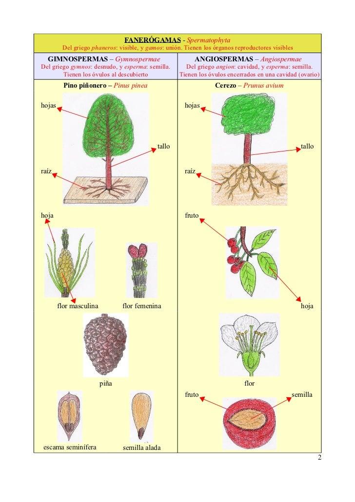 2 clasificaci n de las plantas for Clasificacion de las plantas ornamentales