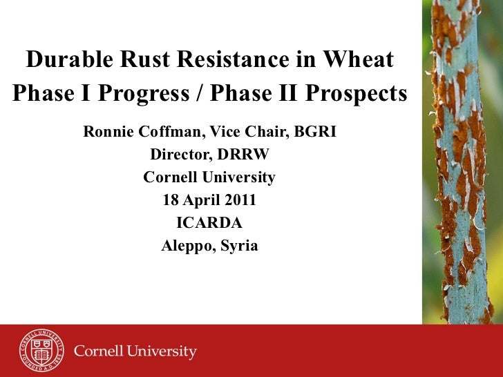 Durable Rust Resistance in Wheat Phase I Progress / Phase II Prospects