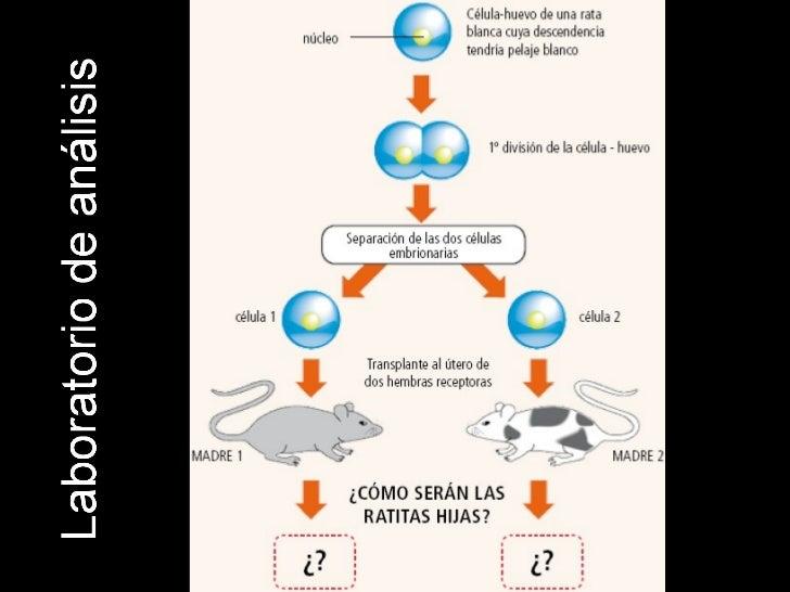 2.  cromosomas, genes, mitosis. Slide 2