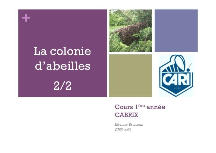 +    La colonie    d'abeilles       2/2                 Cours 1ère année                 CABRIX                 Etienne Br...