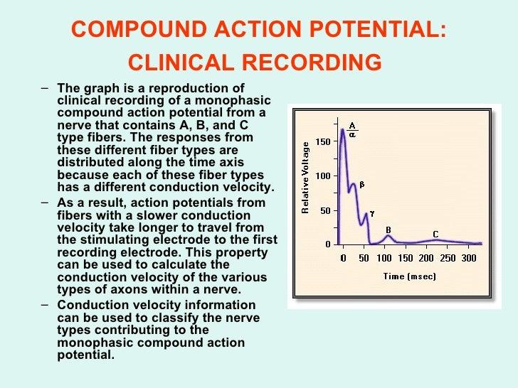 2 exitable 2 08 09 compound action potential ccuart Choice Image