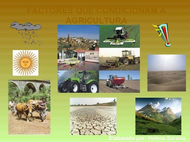 FACTORES QUE CONDICIONAM A AGRICULTURA Elaborado por: Helena Saraiva