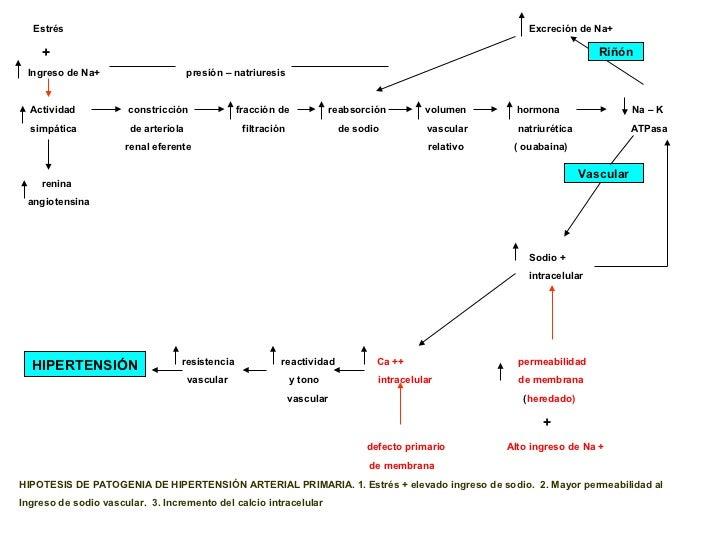 2. fisiopatologia hta