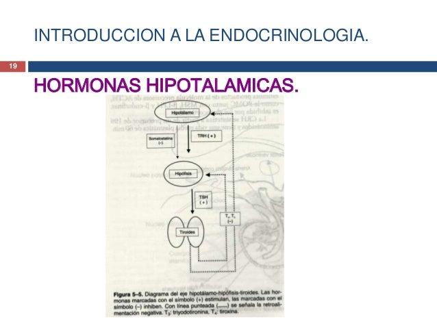 INTRODUCCION A LA ENDOCRINOLOGIA.HORMONAS HIPOTALAMICAS.Hormona liberadora de tirotropina (TRH)• La TRH también causa la l...