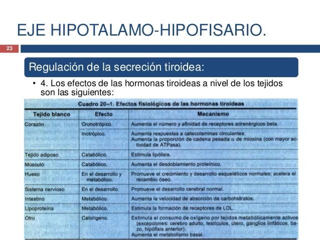 EJE HIPOTALAMO-HIPOFISARIO.Regulación de lasecreción tiroidea:• 5. Los niveles de T3y T4 libre son losencargados de lacont...