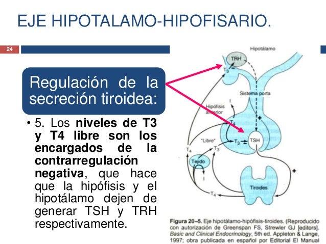 INTRODUCCION A LA ENDOCRINOLOGIA.HORMONAS HIPOTALAMICAS.Hormona liberadora de corticotropina(CRH)• La CRH fue descubierta ...