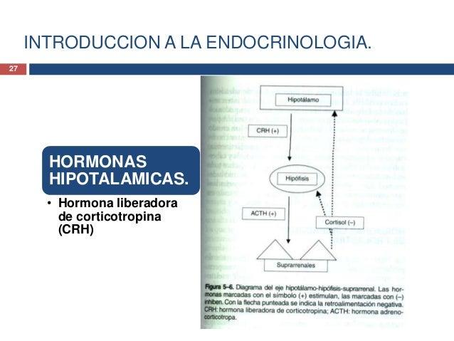 INTRODUCCION A LA ENDOCRINOLOGIA.HORMONASHIPOTALAMICAS.Hormona liberadora decorticotropina (CRH)• La CRH se sintetiza a pa...