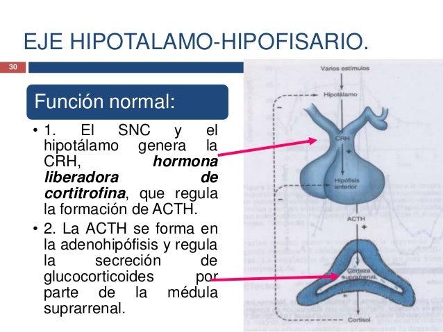 EJE HIPOTALAMO-HIPOFISARIO.Función normal:• 3. El control de la secreciónde ACTH y CRH incluye trescomponentes:• a) secrec...