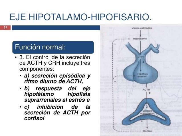 EJE HIPOTALAMO-HIPOFISARIO.Función normal:• 4. El control de lasecreción de ACTH yCRH incluye trescomponentes:• a) secreci...
