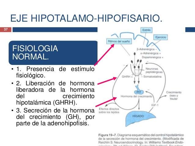 EJE HIPOTALAMO-HIPOFISARIO.FISIOLOGIANORMAL.• 4. Acciones directas deestimulación de la GH alcrecimiento delcartílago, y• ...