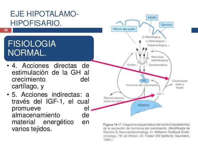 EJE HIPOTALAMO-HIPOFISARIO.39