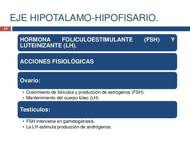 EJE HIPOTALAMO-HIPOFISARIO.FSH Y LH ENLA MUJER.• La FSH estimula elcrecimiento de lascélulas de lagranulosa de losfolículo...