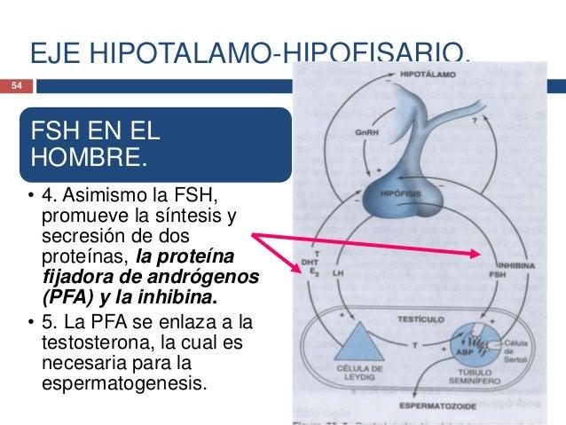 INTRODUCCION A LA ENDOCRINOLOGIA.HORMONAS HIPOTALAMICAS.Dopamina.• La dopamina es la principal hormonainhibidora de prolac...