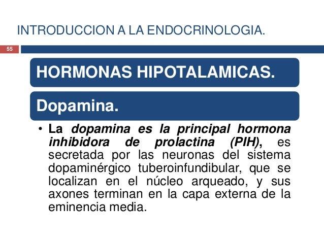 INTRODUCCION A LA ENDOCRINOLOGIA.HORMONAS HIPOTALAMICAS.Dopamina.• Esta se encuentra presente en lacirculación porta-hipof...