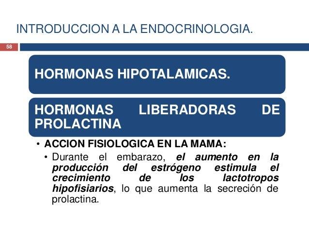 INTRODUCCION A LA ENDOCRINOLOGIA.HORMONAS HIPOTALAMICAS.HORMONAS LIBERADORAS DEPROLACTINA• ACCION FISIOLOGICA EN LA MAMA:•...