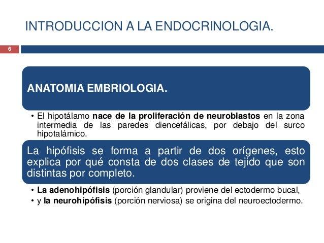 INTRODUCCION A LA ENDOCRINOLOGIA.ANATOMIA EMBRIOLOGIA.• El hipotálamo nace de la proliferación de neuroblastos en la zonai...