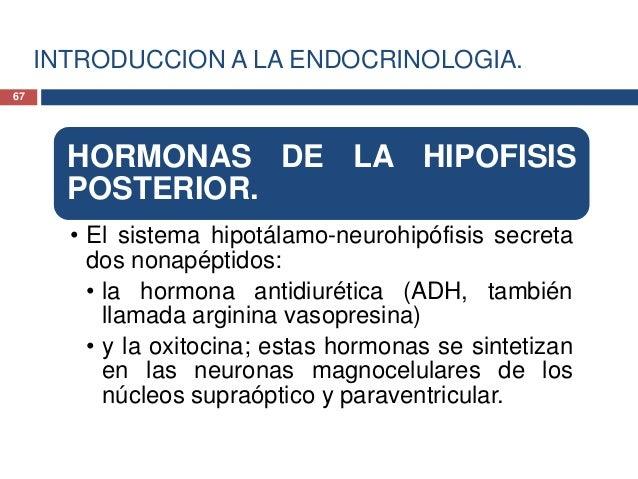 INTRODUCCION A LA ENDOCRINOLOGIA.HORMONAS DE LA HIPOFISISPOSTERIOR.• La ADH constituye un regulador importante delequilibr...
