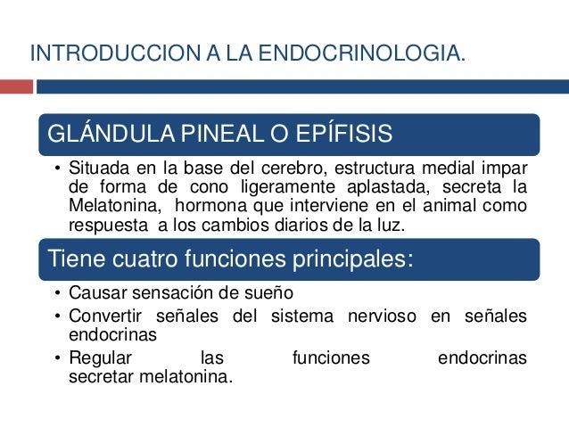 Secreción: hormona melatonina (hormona que ayuda a regularel proceso de pubertad y protección del cuerpo de daño celularca...