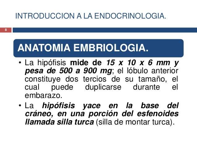 INTRODUCCION A LA ENDOCRINOLOGIA.ANATOMIA EMBRIOLOGIA.• La hipófisis mide de 15 x 10 x 6 mm ypesa de 500 a 900 mg; el lóbu...