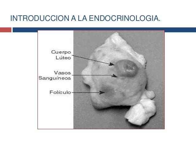 2.Generalidades del hipotalamo