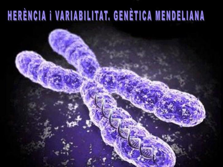 CONCEPTES PREVIS: LA MEIOSIEl nombre de cromosomes dunaespècie roman constant degeneració en generació.La reprodució sexua...